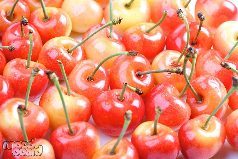 Studio shot of cherries - background