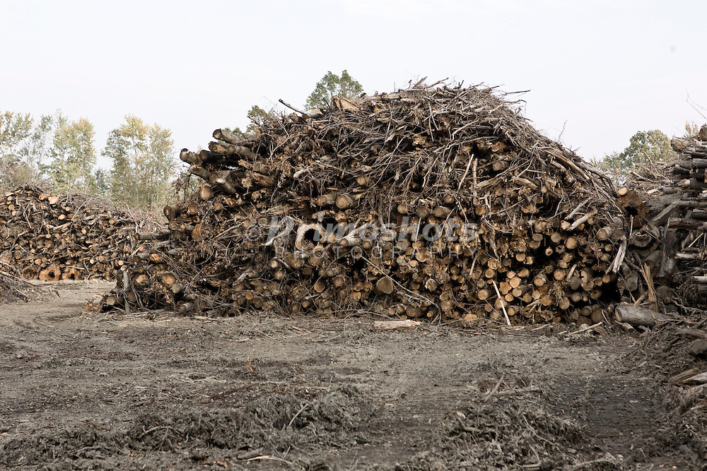 Cut down trees are stacked in fields where they once stood tall to make way for new homes during the home foreclosure crisis.