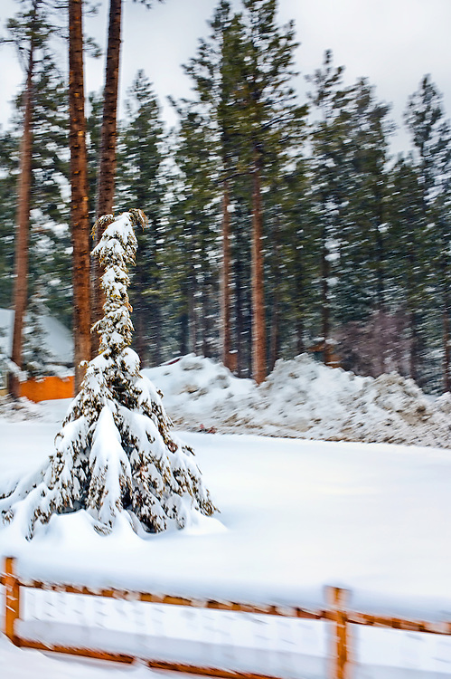 Small pine tree behind a fence with motion blur to give you the feel of movement. Snow storm in Big Bear California, USA.