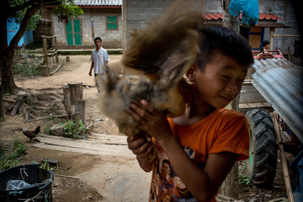 A boy struggles with a chicken in the village of Khoc Kham.