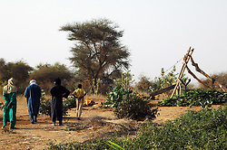Niger, Agadez, Tidene, 2007. Rissa Ixa and Heishi Ali survey the area around the well head. The gardens are well-protected from animals.