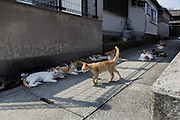 Aoshima, Ehime prefecture, September 4 2015 - Cats lazing in the afternoon.<br /> Aoshima (Ao island) is one of the several « cat islands » in Japan. Due to the decreasing of its poluation, the island now host about 6 times more cats than residents.