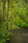 Lost Man Creek, Redwoods National Park California