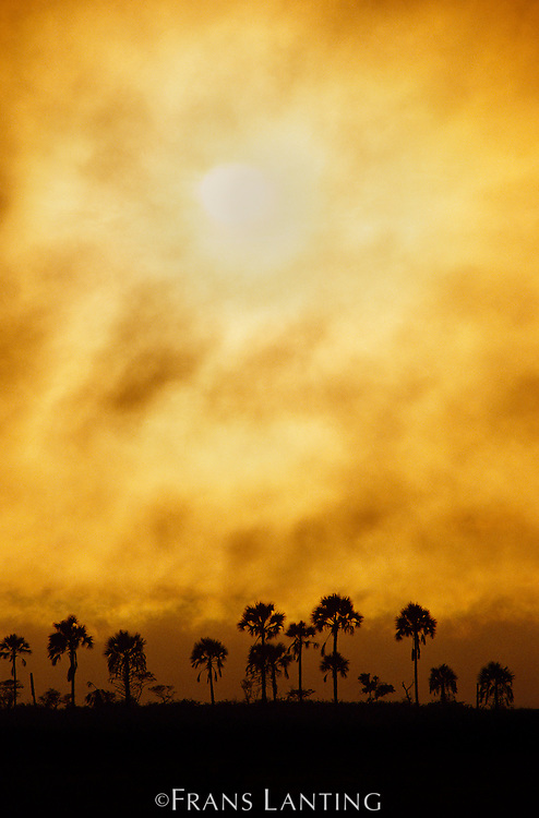Sun over palm savanna, Okavango Delta, Botswana