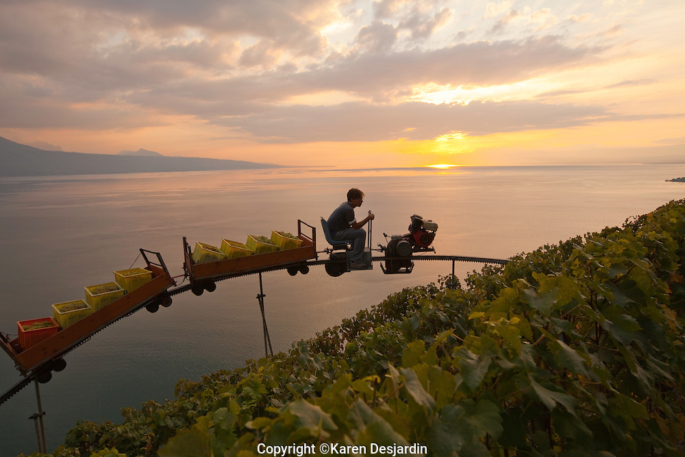 Baskets of wine grapes are transported with the use of a monorail system in the Lavaux wine country in Switzterland. The Lavaux wine country, located along Lake Geneva, between Lausanne and Vevey, is a UNESCO World Heritage Site. http://www.gettyimages.com/detail/photo/monorail-in-the-lavaux-vineyards-high-res-stock-photography/484073283