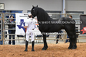 15. FRIESIAN STALLIONS ALL AGES