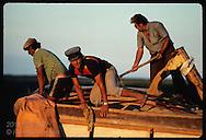 Man climbs from truck full of newly-harvested rice at sunset; Granja Bretanhas, Rio Grande Sul Brazil