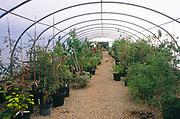 AYBPD0 Plants inside a poly tunnel at a garden centre nursery