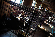 "A wild black bear lays in a cage in a ""bear farm"" near Yianji city in northeastern China..A rusty metal instrument is permanently inserted in the bear's belly, extracting its bile juice, a substance prized by the Chinese as a medicine..This farm houses about 30 adult and young bears, all of them locked here for the rest of their lives..There are no more wild bears in the area."