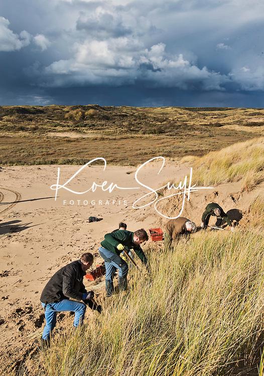 BLOEMENDAAL AAN ZEE - Vrijwilligers helpen in de Kennermerduinen op de  Natuurwerkdag met het verwijderen van helmgras. De Bruid van Haarlem is een prachtig stuivend duin in de Kennemerduinen. Langzaam maar zeker begroeit dit duin met helmgras, waardoor ze niet meer kan stuiven. COPYRIGHT KOEN SUYK