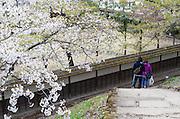 A couple takes a stroll through the grounds of  Tsuruga-jo castle in Aizuwakamatsu City, Fukushima Prefecture, Japan.  Photographer: Rob Gilhooly