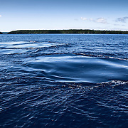 This is a trail of smooth patches left on the surface of the water, created by the fluke strokes of a humpback whale (Megaptera novaeangliae) swimming past. These smooth patches are known as footprints.