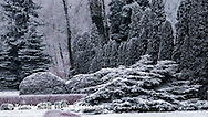 Winter conifers group in Poznan Botanic garden