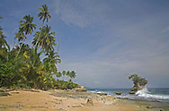 Gandoca Manzanillo Wildlife Refuge, South Caribbean coast, Costa Rica. <br /> <br /> For pricing click on ADD TO CART (above). We accept payments via PayPal.