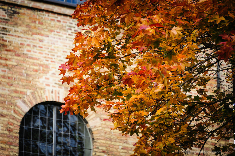 Oslo, Norway, October 2012: Red Autumn Leaves infront of the Cathedral