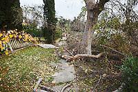 Pasadena Wind Storm Damage Debris on Sidewalk, California