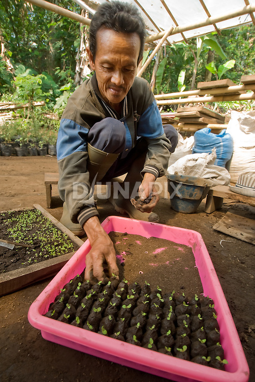 Seedlings for the organic gardens at Kaliandra Sejati.