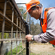 "TOMIOKA TOWN, JAPAN - MARCH 30 : Shoichiro Sakamoto, head of Tomioka Town's animal control hunters group, prepares a booby trap for wild boars at a residential area in an evacuation zone near Tokyo Electric Power Co's (TEPCO) tsunami-crippled Fukushima Daiichi nuclear power plant in Tomioka town, Fukushima prefecture, Japan, March 30, 2017. According to Sakamoto, The present situation is ""unmanageable"", ""to revive the city, we use the machines and the various tools, However, we can not calculate it on a desk. As you know, what we are facing on is the lives in the nature, and the wild boars have four feet."" (Photo by Richard Atrero de Guzman/NUR Photo)"