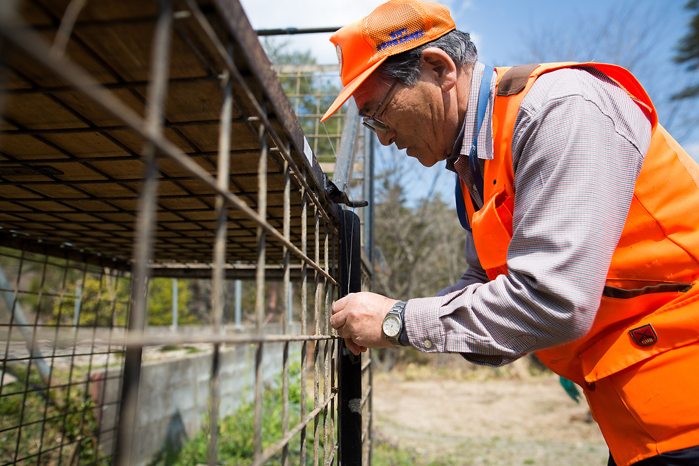 """TOMIOKA TOWN, JAPAN - MARCH 30 : Shoichiro Sakamoto, head of Tomioka Town's animal control hunters group, prepares a booby trap for wild boars at a residential area in an evacuation zone near Tokyo Electric Power Co's (TEPCO) tsunami-crippled Fukushima Daiichi nuclear power plant in Tomioka town, Fukushima prefecture, Japan, March 30, 2017. According to Sakamoto, The present situation is """"unmanageable"""", """"to revive the city, we use the machines and the various tools, However, we can not calculate it on a desk. As you know, what we are facing on is the lives in the nature, and the wild boars have four feet."""" (Photo by Richard Atrero de Guzman/NUR Photo)"""