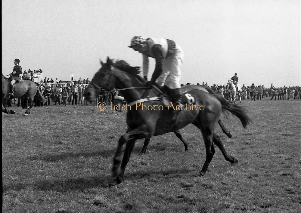 "Irish Distillers Grand National at Fairyhouse.  (M66)..1979..16.04.1979..04.16.1979..16th April 1979..The Irish Distillers Grand National was run today at Fairyhouse Racecourse, Co Meath.The race over 3.5miles is valued at £20,000. the winning trainer will also receive the Tom Dreaper,Perpetual Trophy which will be presented by Mrs Betty Dreaper..Image shows no6 ""Prince Rock"" cantering home at the end of the Grand National at Fairyhouse."