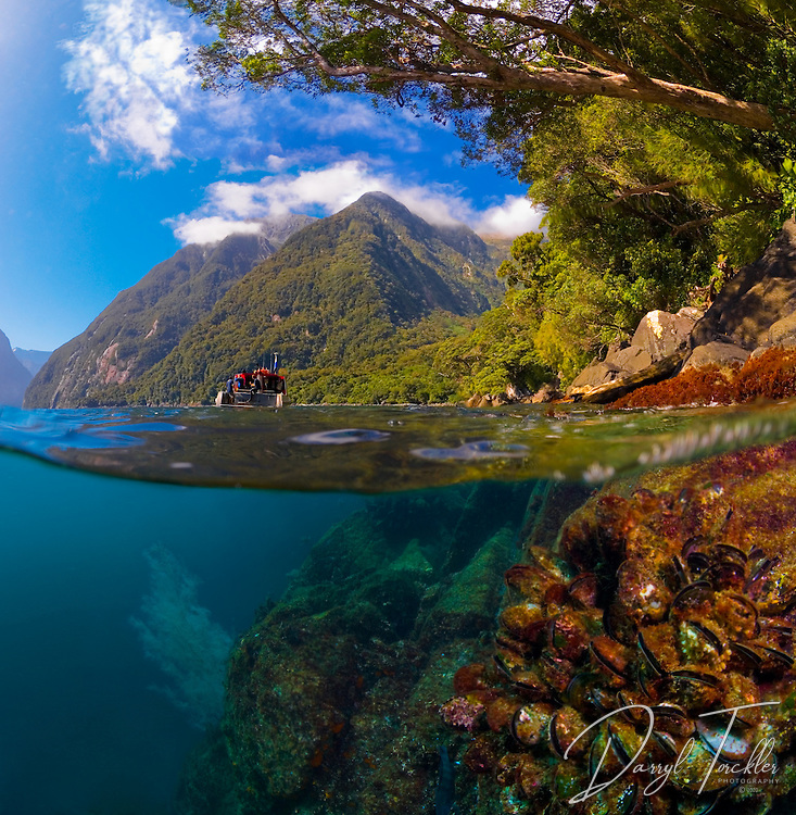 On a calm summer day, it was possible to take this split-level image. It had not rained for 3 weeks.  Usually the murky freshwater layer (1 to 10m)  runs out over the saltwater like a river, making split-level images normally impossible to achieve. Fiordland. New Zealand<br /> <br /> This image is available from; https://oneshot.co.nz    <br /> Image number: 10016256