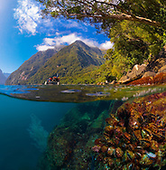 On a calm summer day, it was possible to take this split-level image. It had not rained for 3 weeks.  Usually the murky freshwater layer (1 to 10m)  runs out over the saltwater like a river, making split-level images normally impossible to achieve. Fiordland. New Zealand<br />