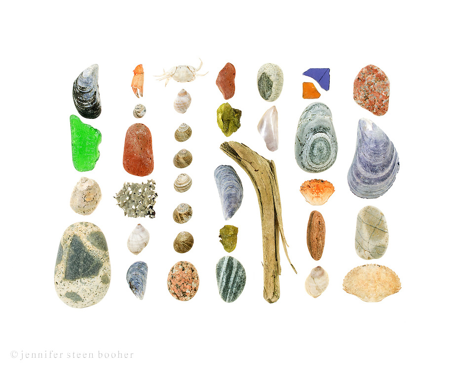 From top to bottom, left to right:  Row 1: Blue Mussel (Mytilus edulis), sea glass, Slipper Shell (Crepidula fornicata), beach stone.  Row 2: crab claw, Common Periwinkle (Littorina littorea), brick, kelp frond covered in bryozoans, Dog Whelk (Nucella lapillus), Blue Mussel.  Row 3:  Green Crab (Carcinus maenas), Dog Whelk, Common Periwinkles, granite beach stone. Row 4: brick, Sea Cauliflower (Leathesia marina), Blue Mussel, Sea Cauliflower, striped beach stone. Row 5: beach stone, mother of pearl interior of mussel shell, driftwood Row 6: sea glass, striped beach stone, Green Crab, sandstone, Dog Whelk Row 7: granite beach stone, Blue Mussel, beach stone, Jonah Crab (Cancer borealis)