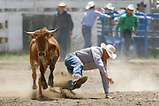 061811-Evergreen, COLORADO-evergreenrodeo-Eric Martin, of Aurora, CO, loses his grip on a steer during the Evergreen Rodeo Saturday, June 18, 2011 at the El Pinal Rodeo Grounds..Photo By Matthew Jonas/Evergreen Newspapers/Photo Editor