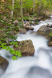 Jordan Stream in Maine's Acadia National Park.