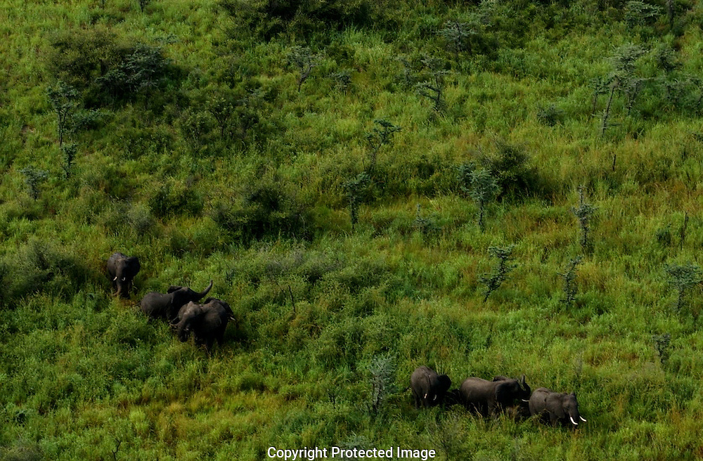 A group of elephants in the Sudd wetlands.  Conservationists have placed satellite collars on animals in South Sudan to unravel patterns of unknown migration routes in animals living in the Boma-Jonglei Landscape. (PHOTO: MIGUEL JUAREZ)