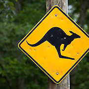 An iconic yellow and black road sign in Australia warning of the risk of kangaroos on the road.