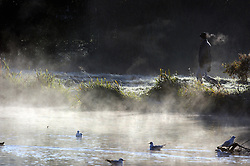 © Licensed to London News Pictures. 06/11/2014<br /> Early morning walk along the River Cray at Foots Cray Meadows.<br /> Freezing cold weather and a cold mist over the River Cray this morning at Foots Cray Meadows,Sidcup,Kent.<br /> (Byline:Grant Falvey/LNP)