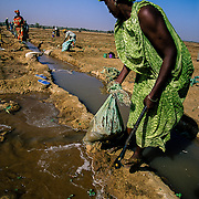 The black population of Brakna, the majority of them Peul, suffered from a brutal repression by the Mauritian army which attempted to expel them to Senegal in 1989. Afterwards, there were droughts and floods. Extracting and channelling water from the Senegal River was the first step taken by the local population to make the lands fertile so that eight women's cooperatives could work them. Brakna, Mauritania.