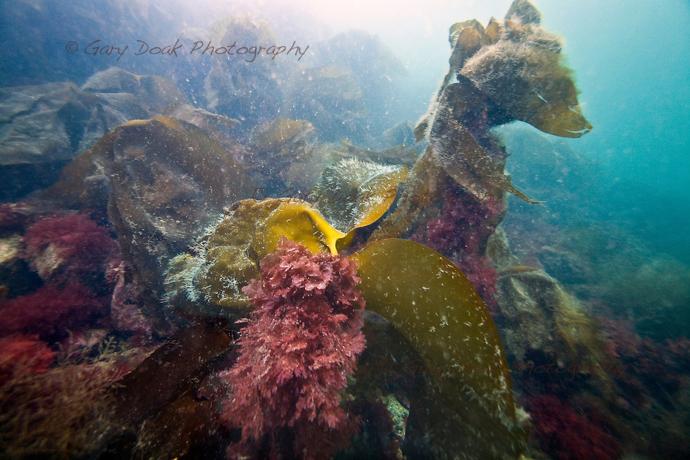 Diving around the Isle of Eigg, Small Isles....