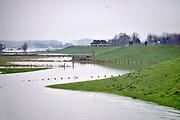 Nederland, Nijmegen, ooijpolder, 6-1-2018Het waterpeil van de rivier de Waal stijgt weer.  De uiterwaarden lopen onder. Het vee is naar hoger land gedreven. Mensen wandelen op de dijk.Foto: Flip Franssen