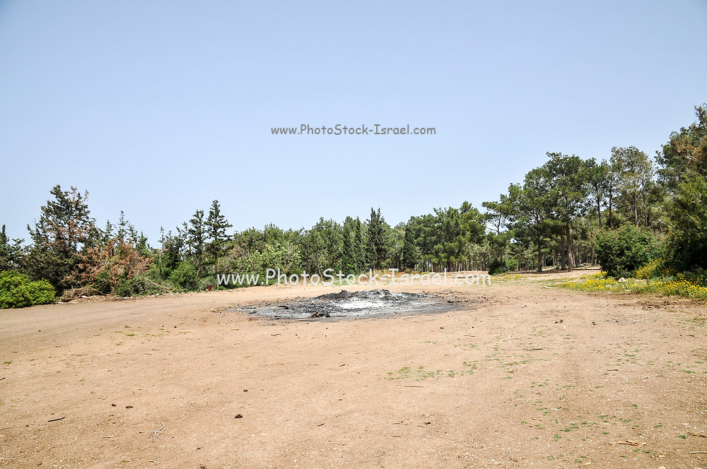 A bonfire circle near a Pine tree forest. Photographed in the Carmel Mountain, Israel