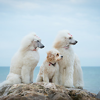 Muted tone images of Dogs