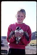 Kjartan Olafsson, 6, holds puffin chick he is about to release to sea @ Heimaey shore; Westmann Is Iceland