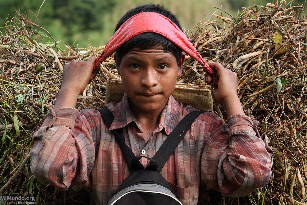 Boy carries beanstalks using a traditional mecapal. After the global coffee crisis in the early 2000's, dozens of landowners, mostly of European descent, abandoned their coffee landholdings in the Polochic River valley. In San Miguel Tucurú, several local Q'eqchi' Mayan communities, often considered slave labor and part of the property's goods, took over the abandoned landholdings and began a process of legalization while attempting to continue coffee production and surviving on sustainable agriculture methods.