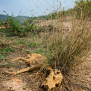 A dead dog passed away from a lack of food and water in the dry season.