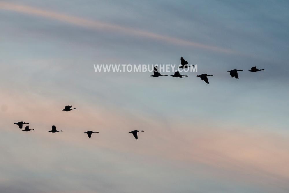 Middletown, New York - Birds on Feb. 4, 2017.