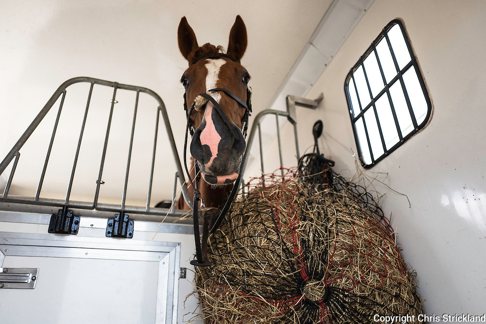 ISEC, Selkirk, Scottish Borders, UK. 16th July 2016. A horse relaxes in its horsebox with a hay net after a dressage test.