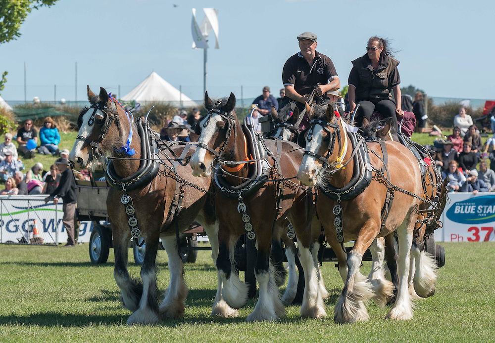 A Clydesdale team in the Grand Parade at the Canterbury A&amp;P Show, Christchurch, New Zealand, Friday, 13 November, 2015.<br /> Credit:SNPA / David Alexander