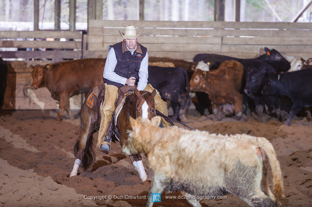 April 30 2017 - Minshall Farm Cutting 2, held at Minshall Farms, Hillsburgh Ontario. The event was put on by the Ontario Cutting Horse Association. Riding in the Open Class is Eric Van Beokel on Mister Boss Hog owned by the rider.