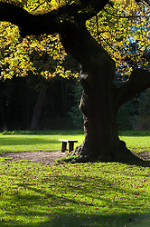 """A Quiet Spot"" Endcliffe Park Sheffield..21 October 2012.Image © Paul David Drabble"
