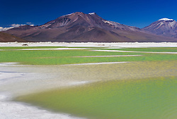 "The green salt lake ""Salar de Surire"" is a natural monument and home to 3 species of flamingos in the Parinacota region of the Chilean Andes, Chile, South America"