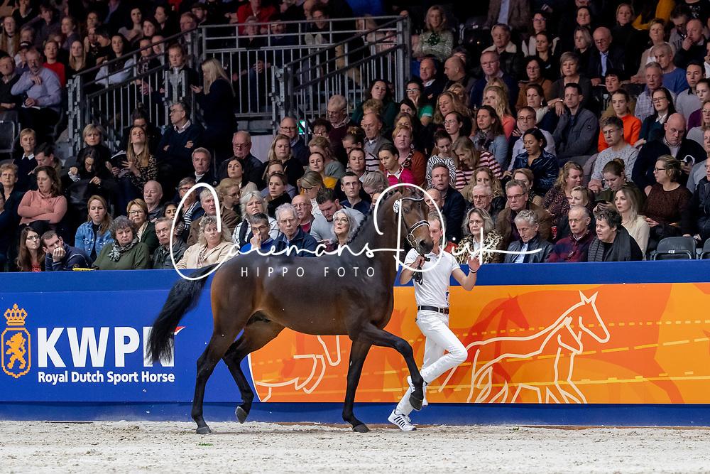 420, Magic Boy<br /> KWPN hengstenkeuring - 's Hertogenbosch 2020<br /> © Hippo Foto - Dirk Caremans<br /> 31/01/2020