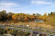 Magee Marsh wildlife area on lake Erie