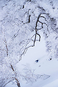 Jake Cohn skis a line in the magical trees at Rusutsu, Japan