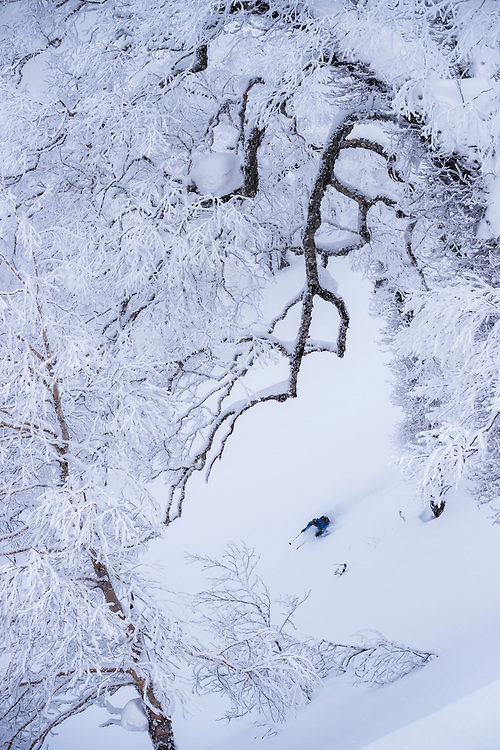 Jake Cohn skis a line in the magical trees at Rusutsu, Japan